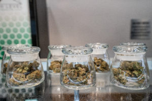 Cannabis Strains In Jars